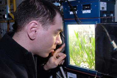 ISS crew member attends to plant experiment. Credit: CASIS